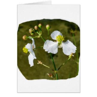 Las flores blancas amarillas se centran alrededor tarjetas