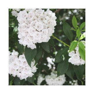 Las flores blancas bonitas del laurel de montaña - impresiones de lienzo