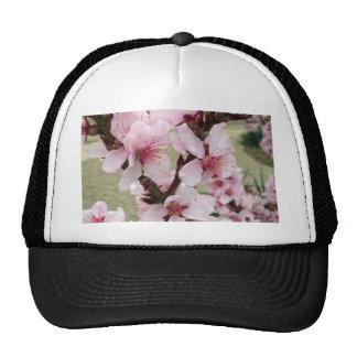 Las flores de cerezo agrupan la primavera gorras
