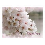Las flores de cerezo de la primavera le agradecen  postal