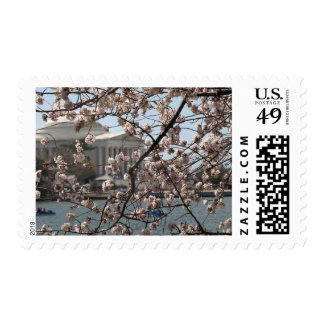 Las flores de cerezo en la floración en Washington Estampilla