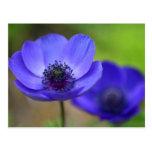 Las flores de la amapola azul ahorran la fecha tarjeta postal