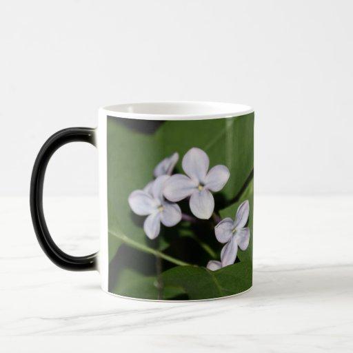 Las flores de la lila gozan de la taza de la vida