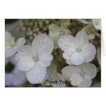 Las flores del Hydrangea le agradecen Tarjeta