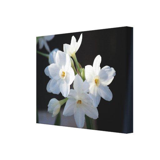 Las flores del narciso envolvieron la lona impresión en lona estirada