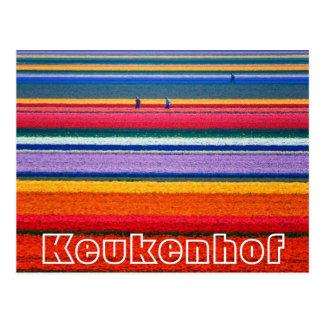 Las flores en la demostración del holandés de Keuk Tarjeta Postal