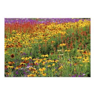 Las flores exhiben en los jardines internacionales fotografías