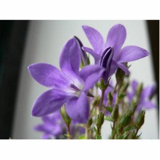 Las flores púrpuras se cierran encima de la foto escultura fotográfica
