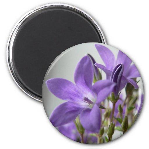 Las flores púrpuras se cierran encima de la foto imán para frigorifico