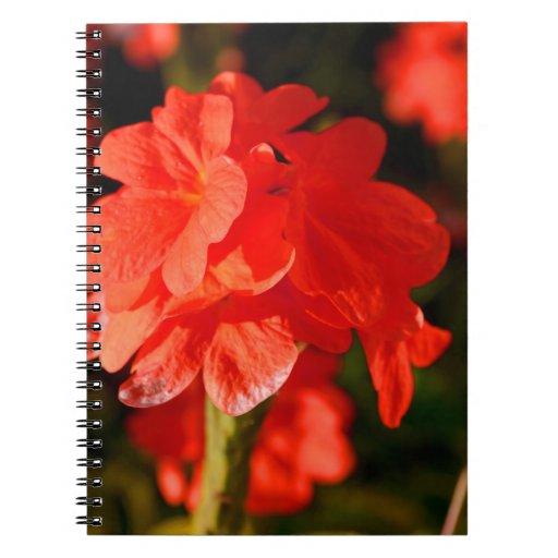 las flores rojas se cierran para arriba libros de apuntes