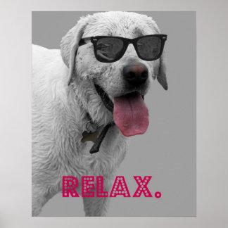 Las gafas de sol que llevan del perro, se relajan póster