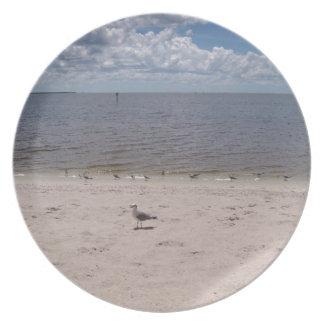 Las gaviotas acercan al mar plato para fiesta
