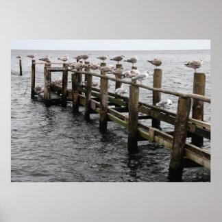 Las gaviotas de Mar Báltica Posters