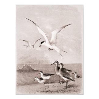 Las gaviotas del vintage modificaron la plantilla  fotografía