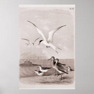 Las gaviotas del vintage modificaron la plantilla  póster