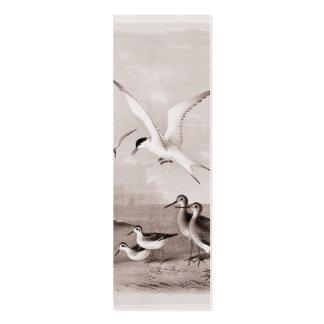 Las gaviotas del vintage modificaron la plantilla plantilla de tarjeta de negocio