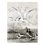 Las gaviotas del vintage modificaron la plantilla tarjetas postales