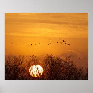 Las grúas de Sandhill siluetearon el sol naciente Impresiones