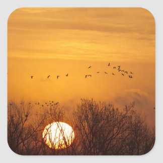 Las grúas de Sandhill siluetearon el sol naciente Calcomanías Cuadradas Personalizadas