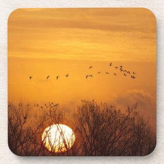 Las grúas de Sandhill siluetearon el sol naciente  Posavasos