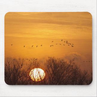Las grúas de Sandhill siluetearon el sol naciente  Alfombrilla De Ratones