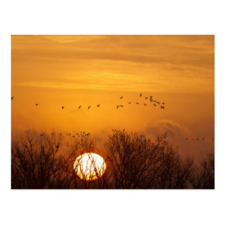 Las grúas de Sandhill siluetearon el sol naciente Tarjeta Postal