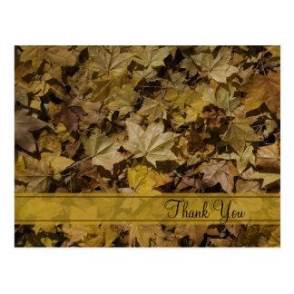 Las hojas caidas amarillo le agradecen postal