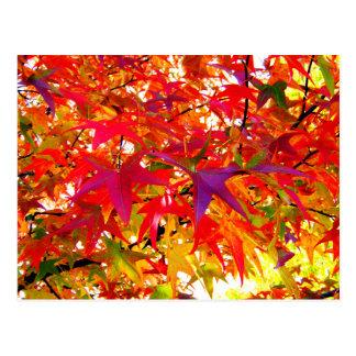 Las hojas de la caída postales