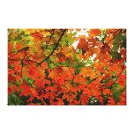 Las hojas de otoño envolvieron la lona impresiones de lienzo