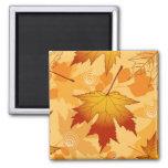 Las hojas de otoño imán de frigorífico