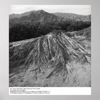Las hojas de palma acercan a Palm Desert de Ansel Póster