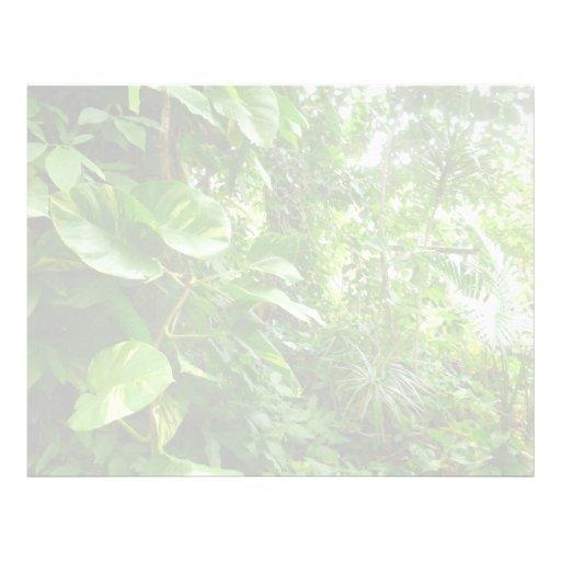 Las hojas gigantes eliminan la opinión de la selva membretes personalizados