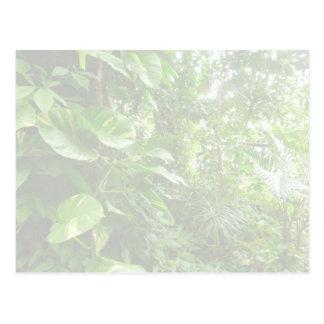 Las hojas gigantes eliminan la opinión de la selva tarjetas postales
