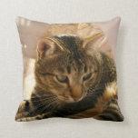 Las imágenes de los regalos de los gatos soportan  cojines