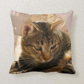 Las imágenes de los regalos de los gatos soportan  cojín