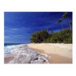 Las Islas Fiji, Tavarua. Esta playa en Tavarua, Tarjeta Postal