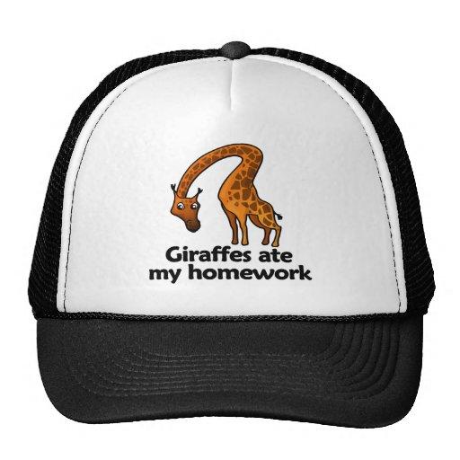 Las jirafas comieron mi preparación gorras