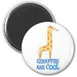 Las jirafas son FRESCAS Imán Para Frigorifico