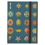 Las joyas submarinas de Ernst Haeckel