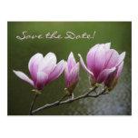 ¡Las magnolias, ahorran la fecha! Tarjeta Postal