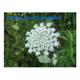 Las malas hierbas son maravillosas tarjetas postales