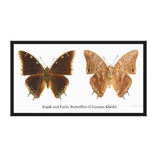 Las mariposas Charaxes Kheili de Rajah y del bajá Impresión En Tela