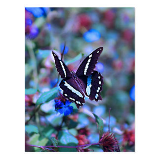 Las mariposas Flitter y agitan Tarjetas Postales