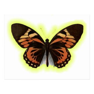 Las mariposas son hermosas postales
