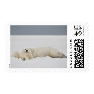 Las mentiras de un cachorro del oso polar en nieve envio