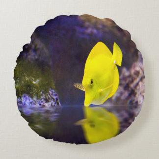 Las miradas amarillas de los pescados del cirujano