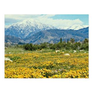 Las montañas de San Bernardino, nieve, florecen la Postal