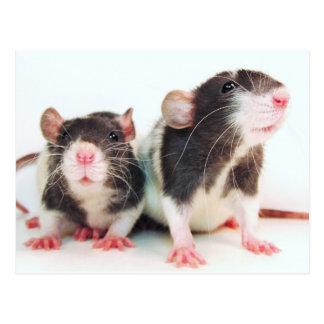 ¡Las mujeres reales poseen ratas! Postales