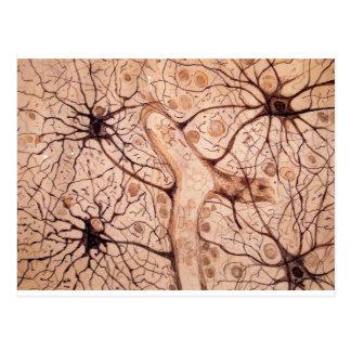 Las neuronas 3 de Cajal Tarjeta Postal
