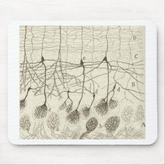 Las neuronas 8 de Cajal Tapetes De Ratón